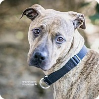 Mixed Breed (Medium) Mix Dog for adoption in Gainesville, Florida - Lexi
