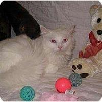Adopt A Pet :: Snow White - Poway, CA