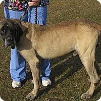 Adopt A Pet :: Beethoven (AL) - Asheboro, NC