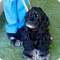 Adopt A Pet :: Elijah - Mission Viejo, CA