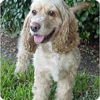 Adopt A Pet :: Meggie - Sugarland, TX