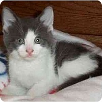 Adopt A Pet :: Gene - Reston, VA