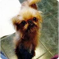 Adopt A Pet :: QUINCY  - ADOPTION PENDING - Little Rock, AR