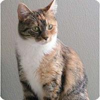 Adopt A Pet :: Peshie - Monroe, GA