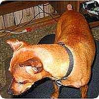 Adopt A Pet :: Alice - Florissant, MO