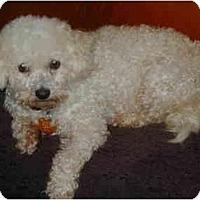 Adopt A Pet :: Sugar - Wellington, OH