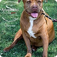 Adopt A Pet :: Princess - Gilbert, AZ