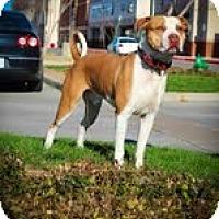 Adopt A Pet :: Maximus - Justin, TX