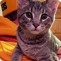 Adopt A Pet :: Peeta - Green Bay, WI