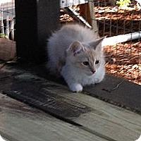 Adopt A Pet :: Fleece - Monroe, GA