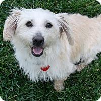 Adopt A Pet :: Jamie - Low shedding dog! - Yorba Linda, CA