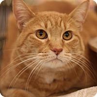 Adopt A Pet :: Evey - Sacramento, CA