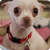 Adopt A Pet :: Cookie - Marietta, GA