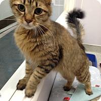 Adopt A Pet :: Athena - Newport Beach, CA