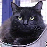 Adopt A Pet :: Pretzel - Mission, BC