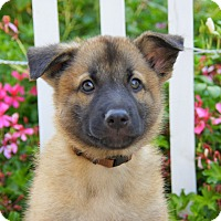 Adopt A Pet :: Carrington von Calw - Thousand Oaks, CA