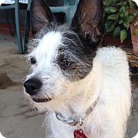 Adopt A Pet :: Betsy - Brea, CA