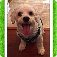 Adopt A Pet :: Adopted!!Scully - NH - Tulsa, OK