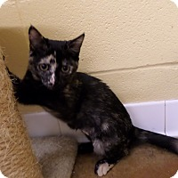 Adopt A Pet :: Minda - Lake Charles, LA