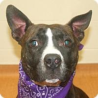 Adopt A Pet :: Solomon Grundy - Cincinnati, OH