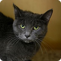 Adopt A Pet :: Stardust - Kettering, OH