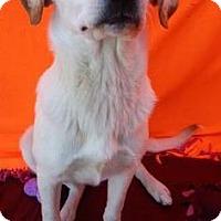 Adopt A Pet :: Buford - Bedford, TX