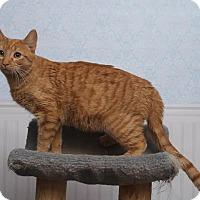 Adopt A Pet :: Handsome - Chippewa Falls, WI