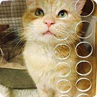 Adopt A Pet :: Aslan - Wayne, PA