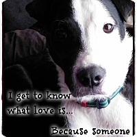 Adopt A Pet :: Sissy - Joliet, IL