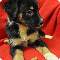 Adopt A Pet :: Cupid - Erwin, TN