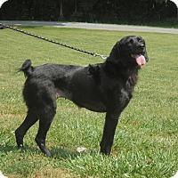 Adopt A Pet :: Crickit - Alexandria, VA