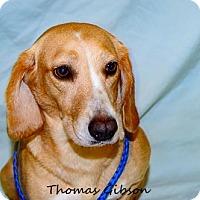 Adopt A Pet :: Vassa - Oakland Park, FL