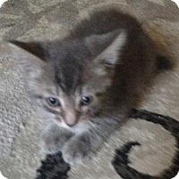 Adopt A Pet :: Buster - Hudson, NY