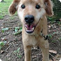 Adopt A Pet :: Smiley - Exceptional - Capon Bridge, WV