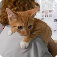 Adopt A Pet :: Finley - Belleville, MI