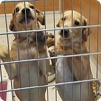 Adopt A Pet :: Chip - Gloucester, MA