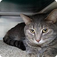 Adopt A Pet :: Pumpkin - Elyria, OH