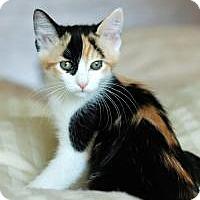 Adopt A Pet :: Juno - San Carlos, CA
