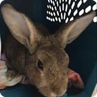 Adopt A Pet :: James - Oceanside, CA