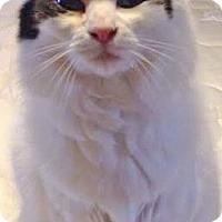 Adopt A Pet :: Kiku - Davis, CA