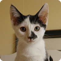 Adopt A Pet :: Smudge - Amherst, MA