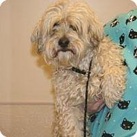 Adopt A Pet :: Morris - Wildomar, CA