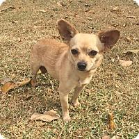 Adopt A Pet :: Twix - Boca Raton, FL