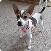 Adopt A Pet :: Shelby - Ashville, OH
