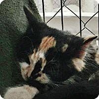 Adopt A Pet :: Elsa - Fallbrook, CA