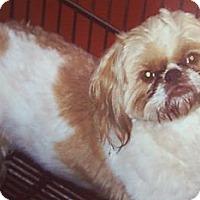Adopt A Pet :: Max - Garwood, NJ
