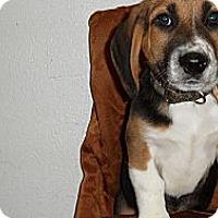 Adopt A Pet :: Meter - Seattle, WA