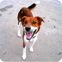 Adopt A Pet :: marigold - Scottsdale, AZ