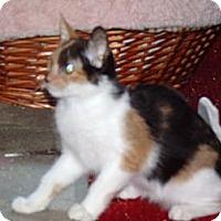 Adopt A Pet :: Astaroth & Niburu - Scottsdale, AZ