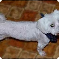 Adopt A Pet :: Parker - Rigaud, QC